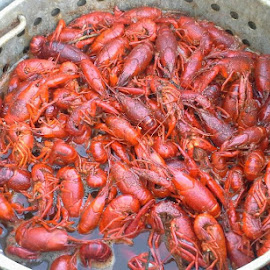 Crawfish by Catina Laine - Food & Drink Meats & Cheeses