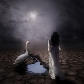 Mist Swan  by Michael Dalmedo - Digital Art Things (  )