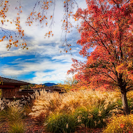 Napa Valley in Autumn by Jay Snell - City,  Street & Park  Neighborhoods ( blue sky, autumn, trees, landscape, napa,  )