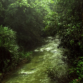 by Hari Prasath - Nature Up Close Water ( nature, riverside, nature up close, rivers, river,  )