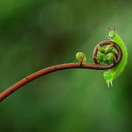 Hello, buddy... by Robby Fakhriannur - Animals Insects & Spiders ( animals, macro, nature close up, caterpillar, insects )