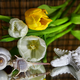 by Dipali S - Artistic Objects Other Objects ( shells, spiked, decoration, white, artistic, yellow, tulips, seashells, natural )