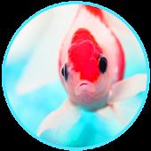 App Aquarium Live Wallpaper version 2015 APK