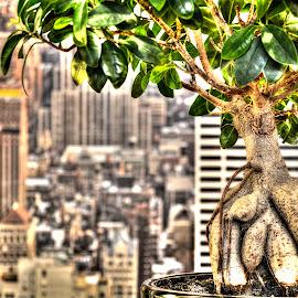 Bonsai by Dan Flimanu - Digital Art Things ( bonsai )