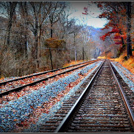 Rail Way Tracks Maryland by Denny Paul - Transportation Railway Tracks ( color, fall, maryland, tracks, leaves )