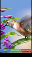 Screenshot of Hummingbirds HD Wallpaper