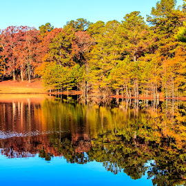 Reflections by Carol Plummer - Nature Up Close Trees & Bushes ( water, reflection, autumn, trees, leaves )