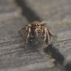 Bronze Jumper