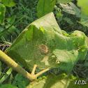 Spider Nest