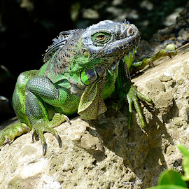 by Terry Barker - Animals Reptiles