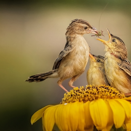 Morning Breakfast by Roy Husada - Animals Birds