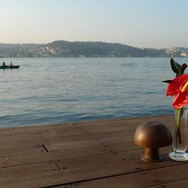Morning by Gabriela Ivanova - Novices Only Objects & Still Life ( bosphor, coffee, sunrise, morning, flower )