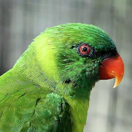 Lowry Park Zoo 31 by Terry Saxby - Animals Birds ( bird, zoo, park, terry, florida, tampa, usa, saxby, nancy, lowry )