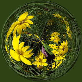 Round Yellow Daisies by Colleen Legree - Abstract Fine Art ( abstract, circular, fineart, fine art, daisy, yellow, flowers )