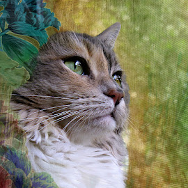 Ms. Squeaky by Trish Hamme - Animals - Cats Portraits