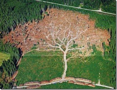 Deforestration-787836