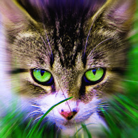 by Terri Anderson - Animals - Cats Kittens ( pose, cat, playful, green, cute cat )