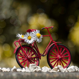 Spring by Stefania Loriga - Transportation Bicycles ( red, bike, still life, daisy, spring )