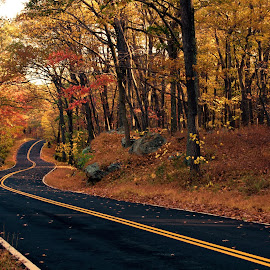 Road Into Autumn by Zev Steinhardt - Transportation Roads ( curve, turn, orange, road, new york, harriman, red, autumn, foliage, fall, twist, bear mountain, brown )
