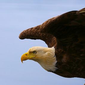 by Capt Jack - Animals Birds ( aleutian islands )
