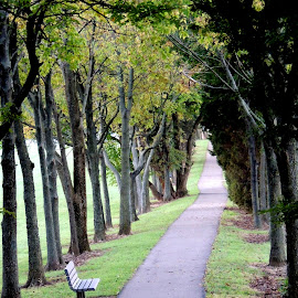 Thomas Cloud, Huber Heights, OH  by Ercilia Cole - City,  Street & Park  City Parks (  )
