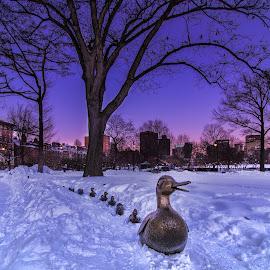 Make way for Ducklings by Ron Phillips - City,  Street & Park  City Parks ( ducklings, winter, park, boston, snow, ducks, public garden,  )