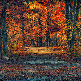 Autumn Has Arrived by Bill Tiepelman - Nature Up Close Trees & Bushes ( orange, change, driveway, wentzville, vibrant, road, leaves, landscape, woods, spring, rural, missouri, seasons, autumn, new melle, color, foliage, fall, path, trees )