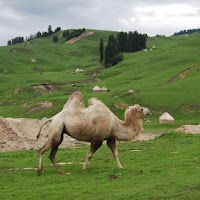 Screenshot of Camels Jigsaw Puzzles
