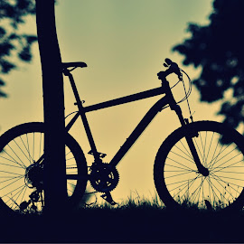 Resting Bike by Zec Mladen - Transportation Bicycles ( bike, sunset, sport, trees, bicycle )
