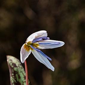 Cocarau! by Gabriela Gabriella - Flowers Single Flower