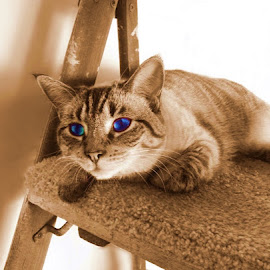 by Karen Phil Griggs - Animals - Cats Portraits ( selective color, pwc )