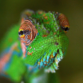 Watching by Seppie Malherbe - Animals Reptiles (  )