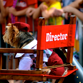 Quiet on set by Mallory Hynes - Animals - Dogs Playing ( parade, dress up, dog, director, mardi gras )