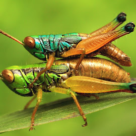 I'll Carry You Everywhere (Tak Gendong Kemana-mana) by Chandra Kushartanto - Animals Insects & Spiders