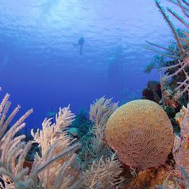 by Steve Morrison - Landscapes Underwater