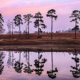 Reflections at Sunrise by Carol Plummer - Nature Up Close Trees & Bushes