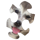 Puppies Puzzle HD icon