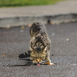 by Leroy Kimbrough - Animals - Cats Kittens (  )