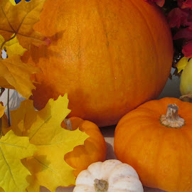 by Dawn Price - Food & Drink Fruits & Vegetables ( pumpkins, fall )