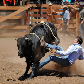 Man down by Johann Perie - Sports & Fitness Rodeo/Bull Riding ( rodeo, bull riding )