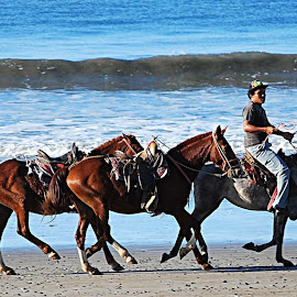 Morning warmups by Ant Tony Gregory - Animals Horses ( horses, waves, pacific ocean, beach, samara costa rica )