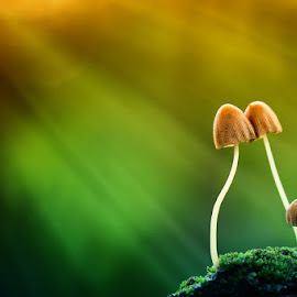 the last kiss by Toto Suprayogi - Nature Up Close Mushrooms & Fungi ( mushroom, macro, fungi, nature, natural )