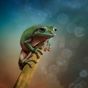 I SEE U by Alonk's Roby - Animals Amphibians