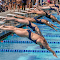Swim Pentathlon-2153-Edit.jpg
