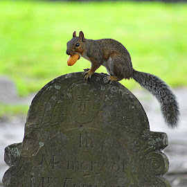 He's known in these parts as the grave digger ;) by Natalie Brennan - Animals Other