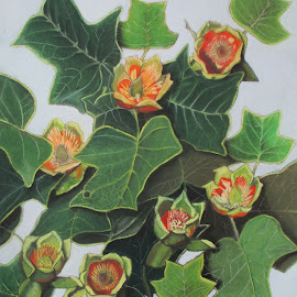 Liriodendron by Marilyn Brown - Painting All Painting ( liriodendron, tree, or, tulip )