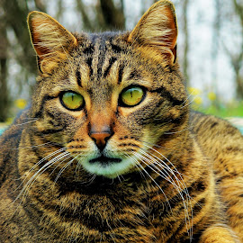 by Luna Sol - Animals - Cats Portraits