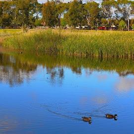 Take It Easy by Leigh Martin - City,  Street & Park  City Parks ( ducks pond pond parks )