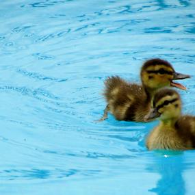 Mom! Mom! by Alan Hammond - Animals Birds ( animals, birds, baby, young, animal )
