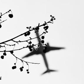 Airplane by Aleksandar Šeter - Black & White Objects & Still Life ( tree, plane, airplane, white, black )